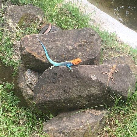 Snake Park: photo6.jpg