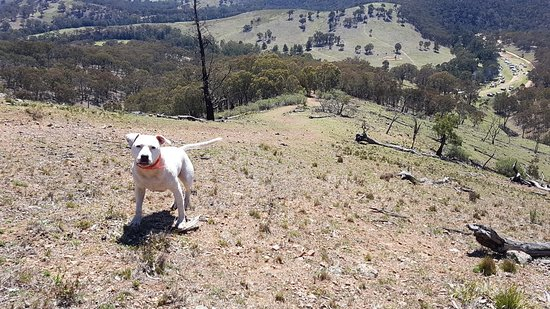 Capertee, Australien: 20180930_111044_large.jpg
