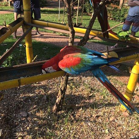 写真Recanto Ecologico Rio da Prata枚