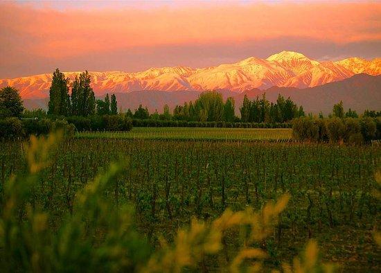 Vive Los Andes