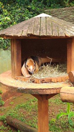 Zoológico de São Paulo: P_20181009_131210_vHDR_On_large.jpg