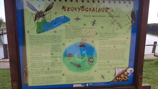 Harkany, المجر: IMG-8f9d2f097ee643d2c5bde760298fbf8c-V_large.jpg