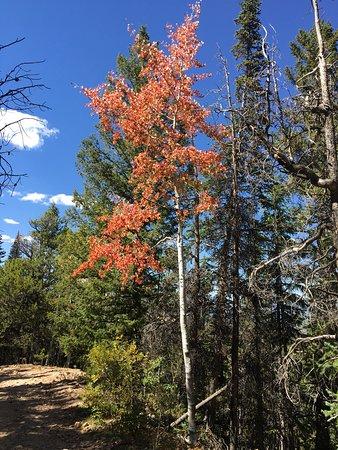 Maroon Bells-Snowmass Wilderness Area 사진