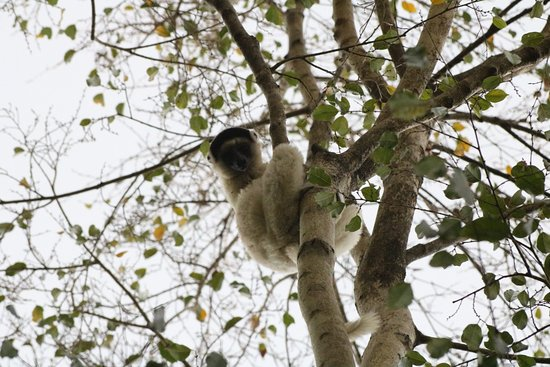 Tsingy de Bemaraha National Park, Madagaskar: 20180929194200_IMG_0220_large.jpg