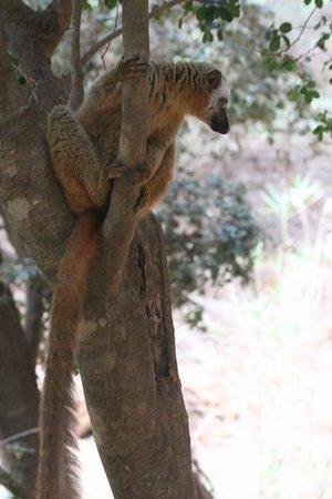 Tsingy de Bemaraha National Park, Madagaskar: 20180929193816_IMG_0216_large.jpg