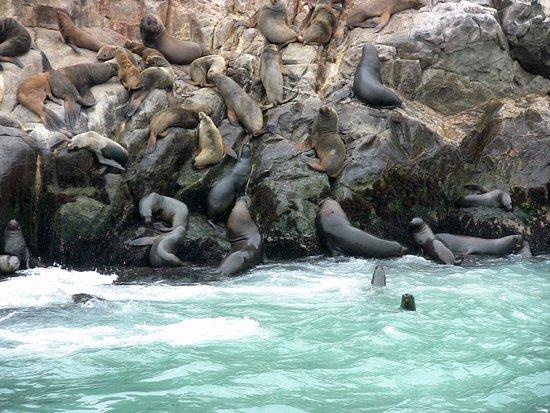 Islas Palomino: Es una exposion de vida al acercarse las embarcaciones