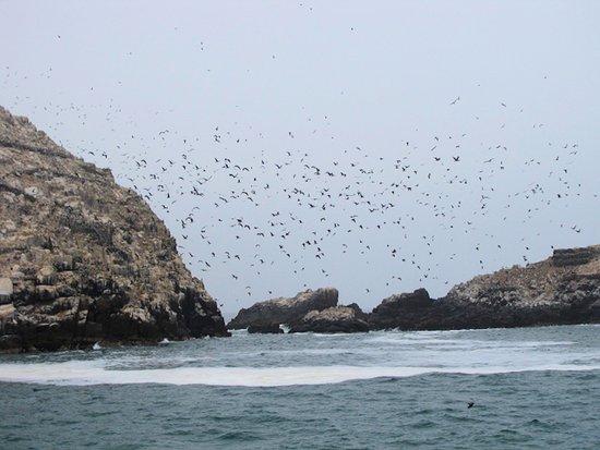 Islas Palomino: Grandes bandas de aves acuaticas
