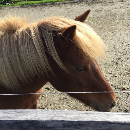 Vermont Icelandic Horse Farm: photo1.jpg
