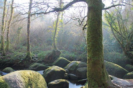 Huelgoat, Francie: Les rochers et les arbres cohabitent sans se gêner...