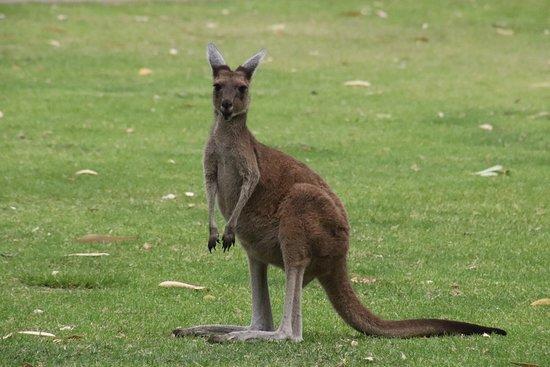 Claremont, Australia: They were not afraid