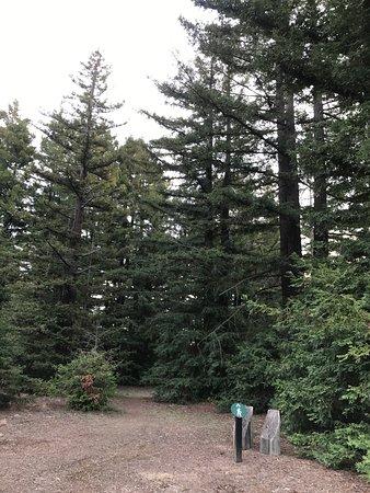 Canberra, Australia: Redwood Forest
