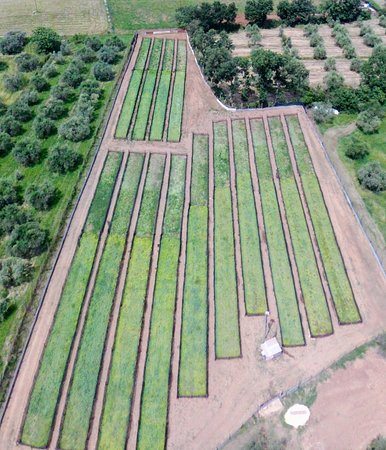 Bomarzo, Italia: Vista aerea allevamento