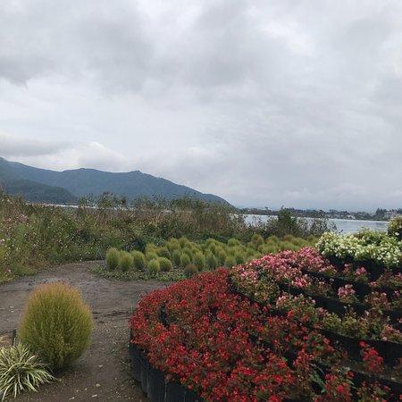 Lake Kawaguchiko: photo1.jpg
