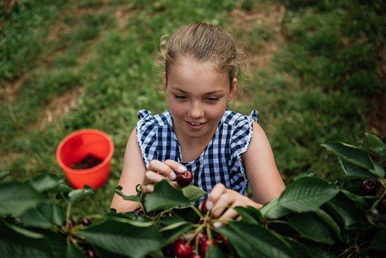 Wandin East, Australia: CherryHill Orchards