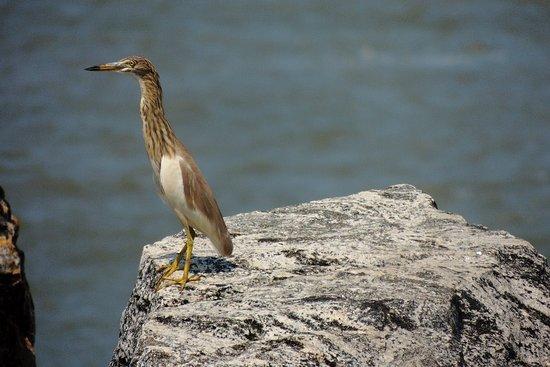 Mahe, Indien: Bird view 2