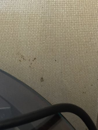 Jeffersonville, IN: wallpaper by the nightstand had some real dark spatter stains either coffee & hopefully not poop
