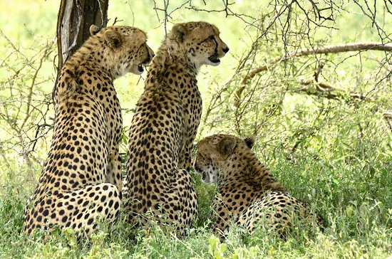 Hluhluwe Imfolozi Safari & Emdoneni...
