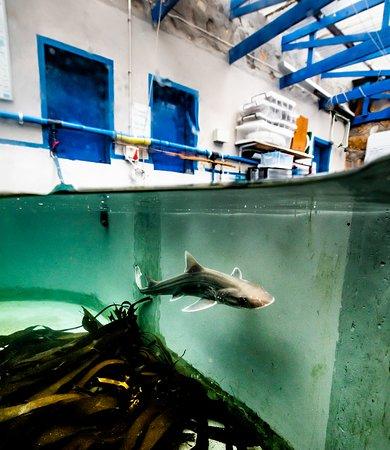 Hermanus, Sudáfrica: Take a tour at the Shark Lab