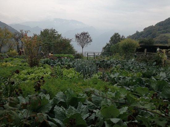 Parzanica, Италия: IMG_20181006_142722_large.jpg