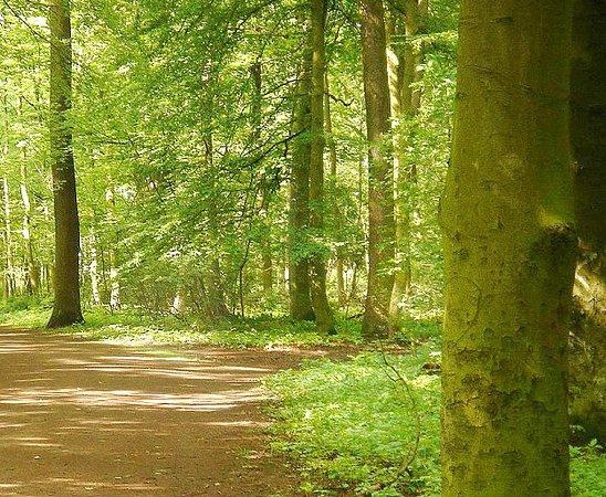 Eilenriede - Park