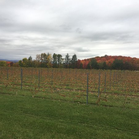 Sainte-Petronille, Canada: Wine and dine at VSP - ile d'orleans. Great white wine.