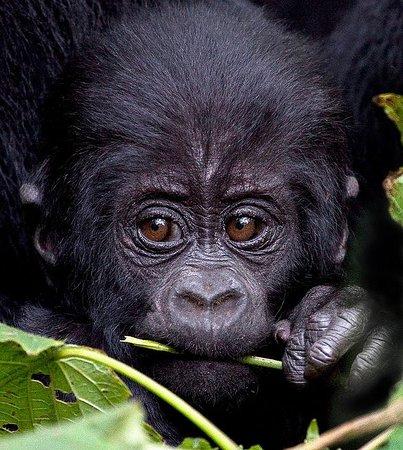 Gorillaland Adventures
