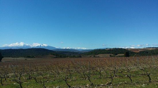 Tautavel, ฝรั่งเศส: vignoble en hiver #canigou