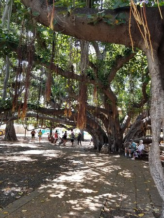 Banyan Tree Park: 20181007_124123_large.jpg