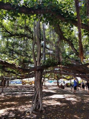 Banyan Tree Park: 20181007_124331_large.jpg