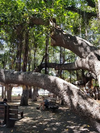 Banyan Tree Park: 20181007_124719_large.jpg