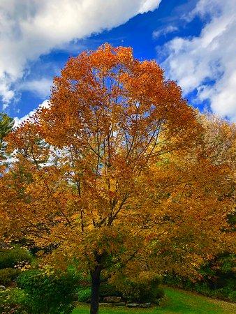 Breathtaking New England Fall Foliage