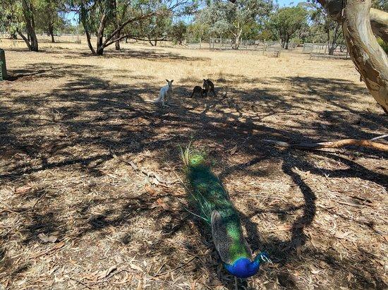 Bordertown, ออสเตรเลีย: park