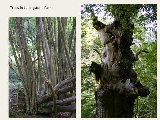 Lullingstone Country Park: Trees upper Beechen wood