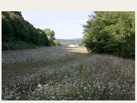 Lullingstone Country Park: Meadow