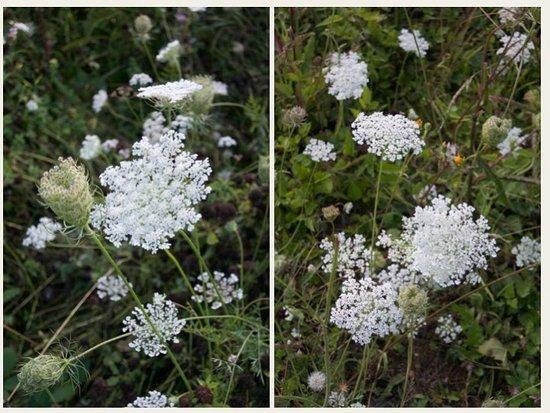 Lullingstone Country Park: Wild Flowers