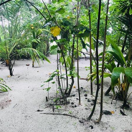 Makunudu Island: photo6.jpg