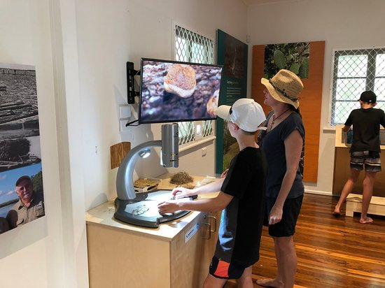 Playing with the new microscope at the Maroochy Wetlands Sanctuary information centre.