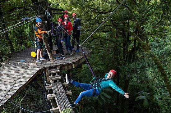 Original Rotorua Forest Zip Line...