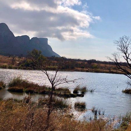 Manyeleti Game Reserve, Sør-Afrika: photo7.jpg