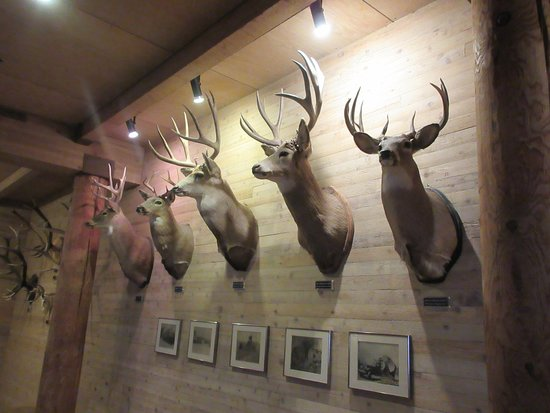 Sun Mountain Lodge: Trophies on the wall