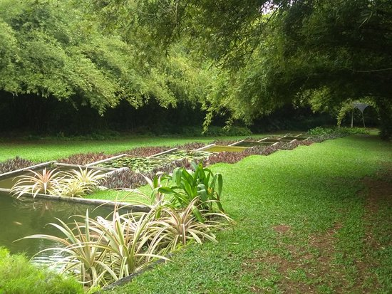 Brief Garden - Bevis Bawa: IMG_20181011_161529772_large.jpg