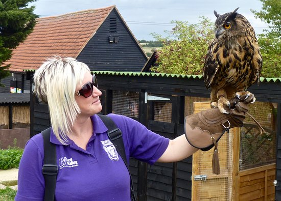 Lee Valley Park Farms: Falconer with Eagle owl