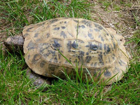 Lee Valley Park Farms: tortoise