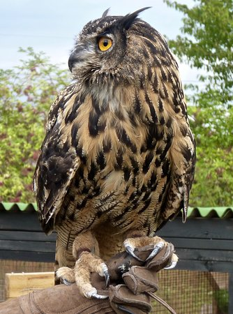 Lee Valley Park Farms: Eagle owl