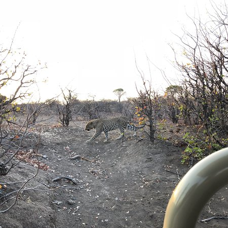 Northern Tuli Game Reserve, Botswana: photo0.jpg