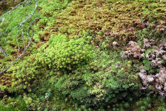 Sainte-Rose-du-Nord, Kanada: flora locale
