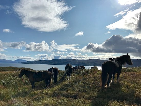 Strachur, UK: Horses taking in the view