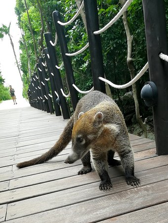 amazing resort surrounded by jungle, rivers and friendly coatimundis