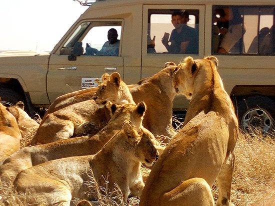 Ijue Africa Safaris: Como siempre Os he dicho que si necesitan disfrutar vuestro viajes,Busca los profesionales,Mira