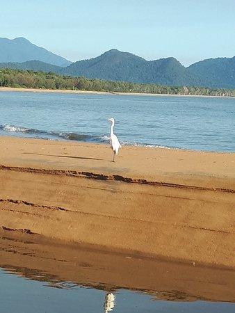 Bramston Beach, Australia: 20181012_070851_large.jpg